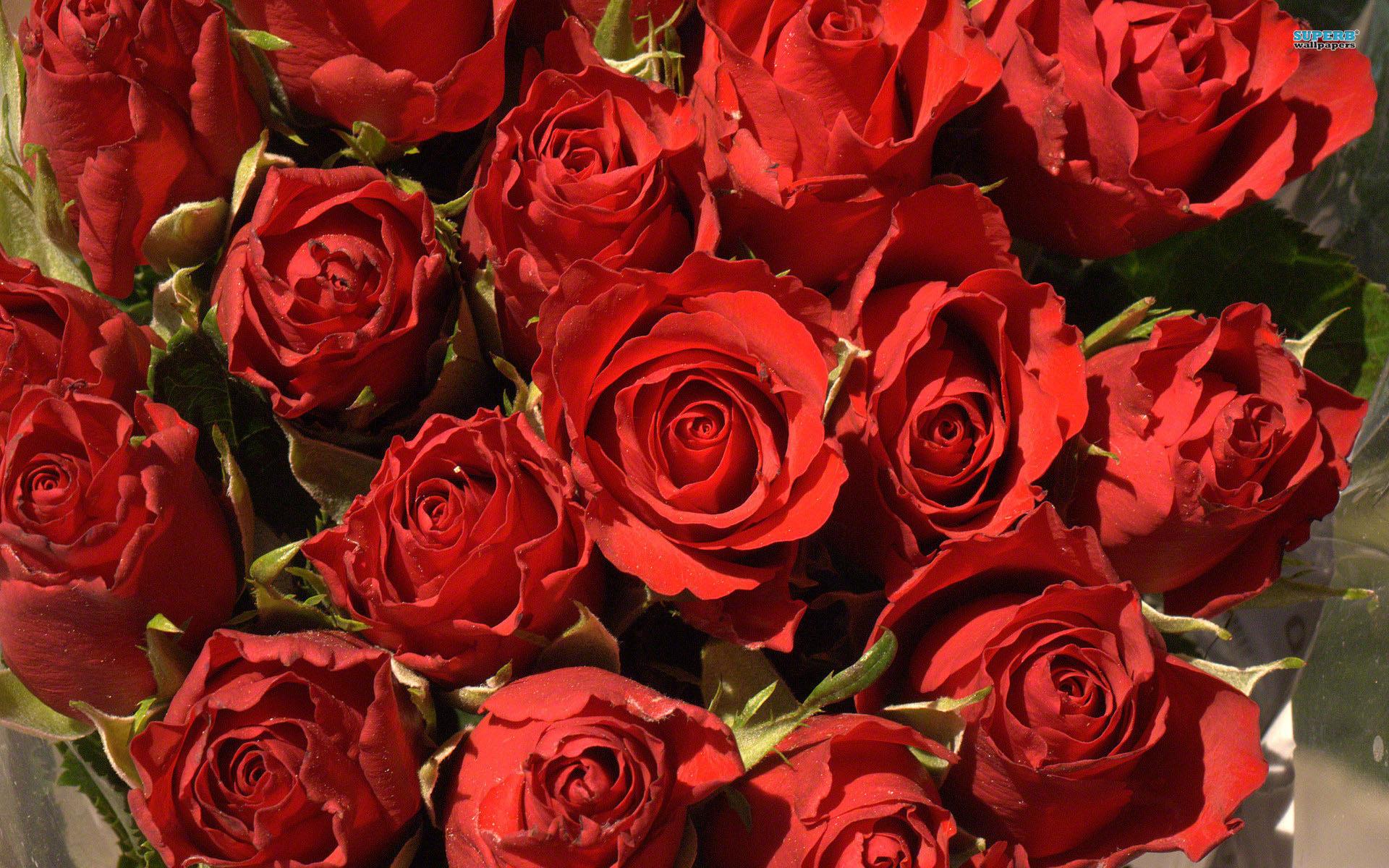 Bảo quản hoa hồng