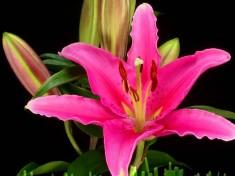 bao quan hoa trong kho lanh -ctvietnam