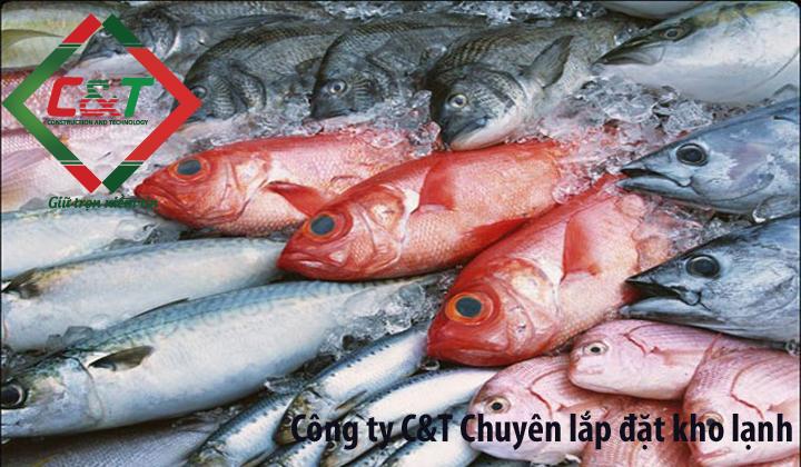 lắp kho lạnh bảo quản cá tươi